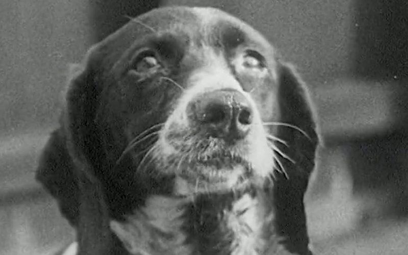 BLUTWÄSCHE BEI EINEM HUND (1915)